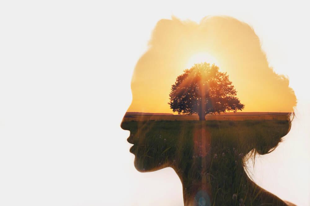 Paisagem de uma árvore em um campo com o sol de pondo ao fundo, recortada no formato da silhueta da cabeça de uma mulher
